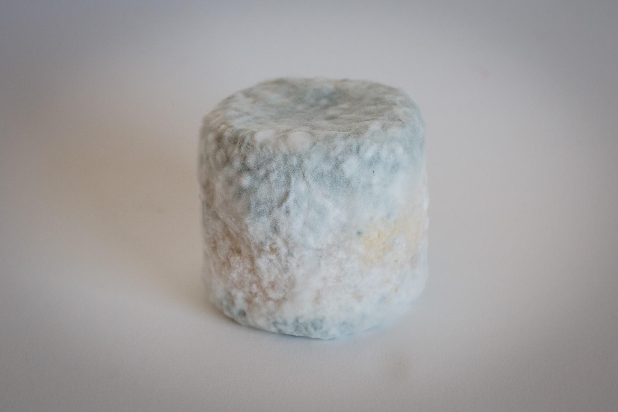 fromage-de-chevre-bleu-tendre-3